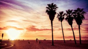 Palm tree in Organe County, Los Angeles, California. Sunset scen