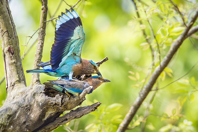 birds-in-Bardia-National-Park-places-in-nepal-most-people-miss