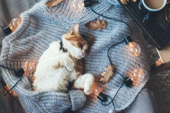 how-blocking-blue-light-helps-you-sleep-kitty-asleep-in-a-sweater-yellow-lights