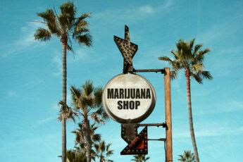california-shop-for-marijuana