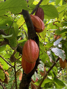 kauai-adventure-destination-beautiful-jungle-nature-travel-traveling-lydgate-farms