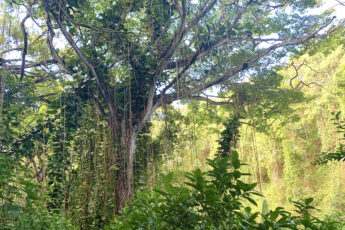 kauai-hawaii-adventure-destination-jungle-beautiful-main-image